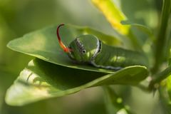 Caterpillar Στοκ Εικόνες