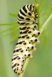 caterpillar Royaltyfria Foton