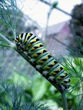 caterpillar Royaltyfri Foto