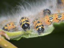 caterpillar Royaltyfria Foton