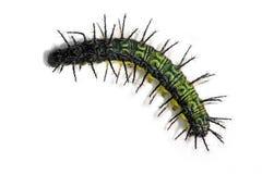 caterpillar Royaltyfri Bild