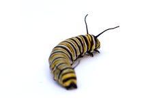 caterpillar Royaltyfri Foto