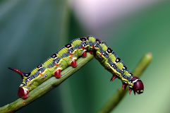 Caterpillar. Macro caterpillar Royalty Free Stock Photos