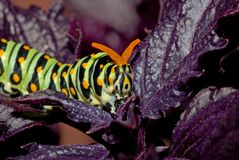 caterpillar Arkivfoto
