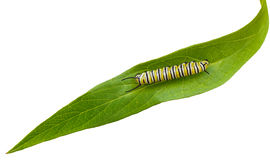 Caterpillar arkivbilder