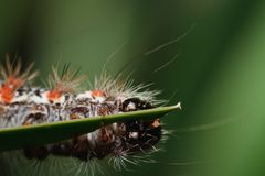 Caterpillar Royalty Free Stock Photo