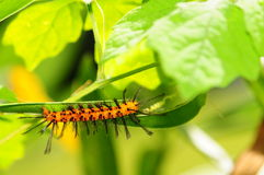 Free Caterpillar Royalty Free Stock Photography - 19552397