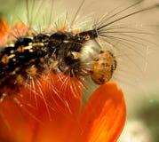 Caterpillar...(2) Stock Photo