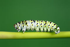 Caterpillar Stock Image