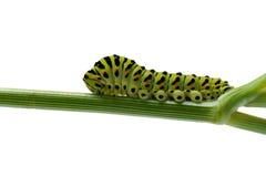 Caterpillar Stock Images