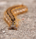 A caterpillar. On a stone Royalty Free Stock Image
