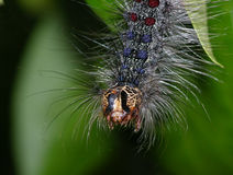 Caterpillar. Detail Stock Image