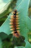 Caterpillar Stockfoto