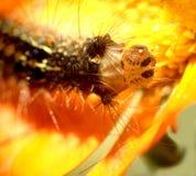 Caterpillar...(3) Stock Image