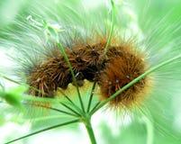 Caterpillar 3 Stock Photography