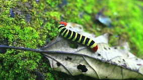 Caterpillar stock footage