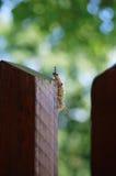 Caterpillar Photo stock