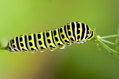 Caterpillar. On the plant stem Royalty Free Stock Photography