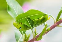 Caterpillar arkivbild