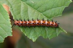 Caterpillar Fotografering för Bildbyråer
