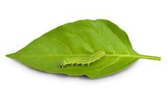 Caterpillar Royalty-vrije Stock Fotografie