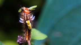 Caterpillar Arkivfoton