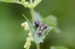 Caterpillar Image libre de droits