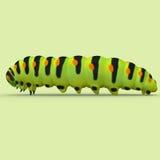 caterpillar Fotografie Stock Libere da Diritti