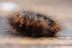Caterpillar Royaltyfri Fotografi