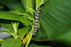 Caterpillar royalty-vrije stock foto's