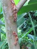 Caterpillar Foto de archivo libre de regalías