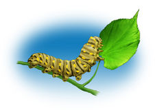 Caterpillar. The yellow caterpillar sits on a green leaf Royalty Free Stock Photo