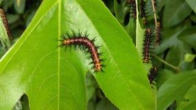Caterpillar Στοκ φωτογραφία με δικαίωμα ελεύθερης χρήσης