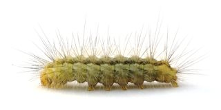 caterpillar Arkivfoto