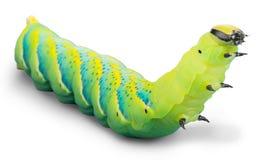 Caterpillar photos stock
