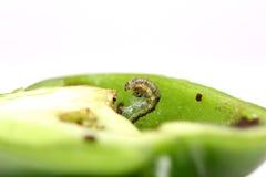 Caterpillar Royalty-vrije Stock Afbeeldingen