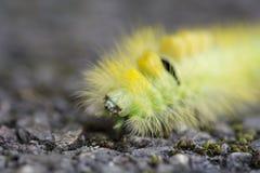 Caterpillar Στοκ φωτογραφίες με δικαίωμα ελεύθερης χρήσης