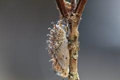 Caterpillar Στοκ εικόνες με δικαίωμα ελεύθερης χρήσης