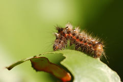 Caterpillar photo stock