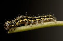 Caterpillar Royalty Free Stock Photos