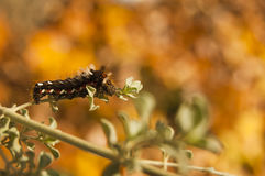 Caterpillar Fotos de archivo