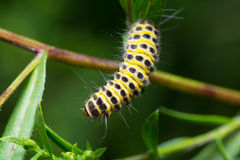 Caterpillar στοκ εικόνα