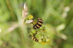 Caterpillar zdjęcia stock