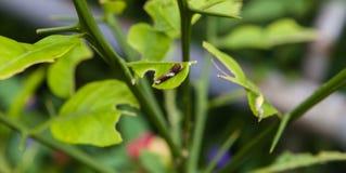 Caterpillar Stock Fotografie