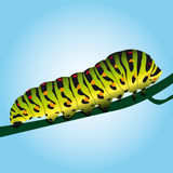 Caterpillar Stock Images