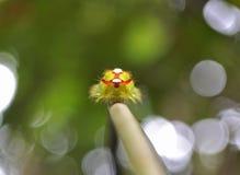 Caterpillar Στοκ Φωτογραφίες