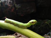 Caterpillar Fotos de archivo libres de regalías