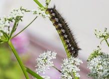 Caterpillar zdjęcie royalty free