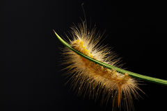 Caterpillar against Royalty Free Stock Photos