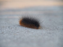 The caterpillar. The alone caterpillar on asphalt Royalty Free Stock Photos